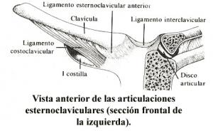 Pinch off, articulaciones esternoclaviculares