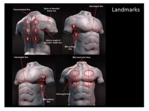 Imagen 3: Representación esquemática de las referencias anatómicas del tórax. Soldati et al. 2020.