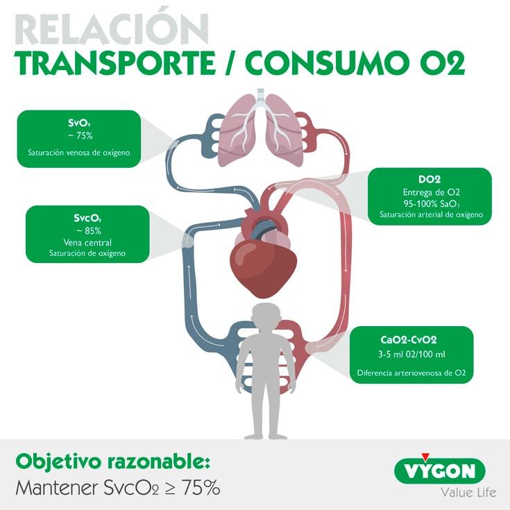 Relación-transporte-consumo-O2