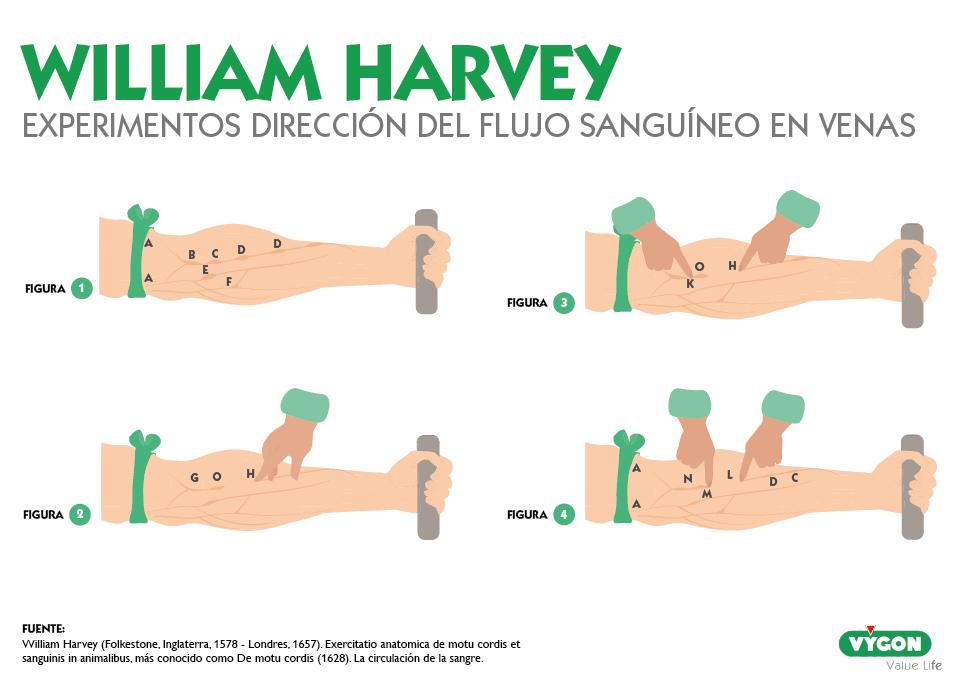 circulación sanguínea William Harvey